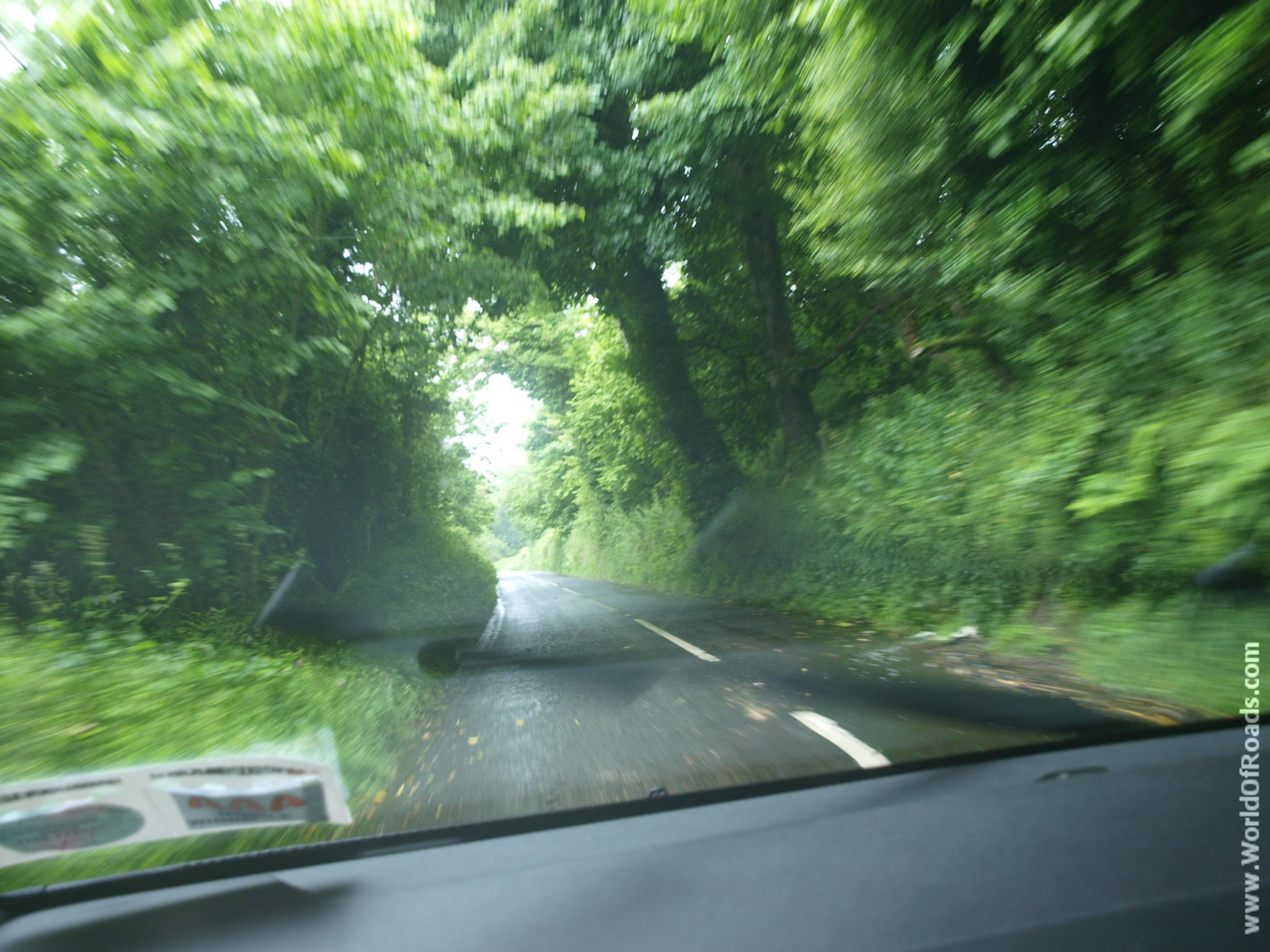 Деревья над дорогой. Северная Ирландия.