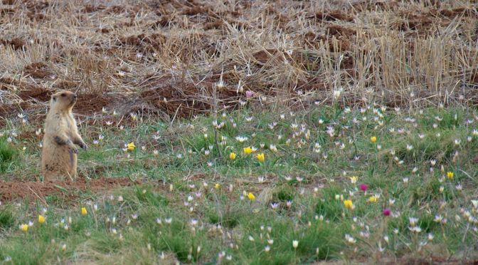 Весна в Казахстане — 2014